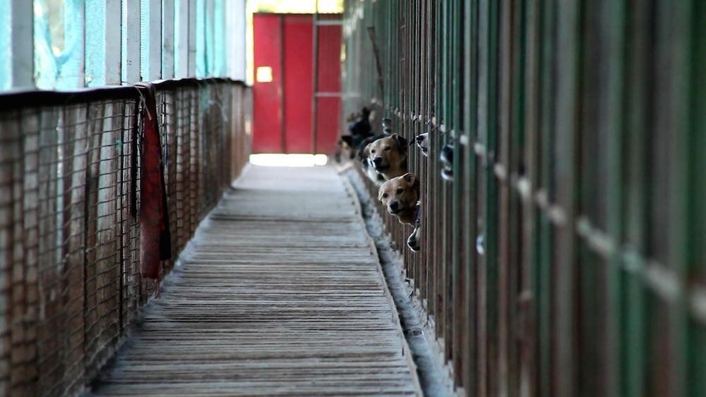"""Кадр из фильма """"Каждая собака"""""""