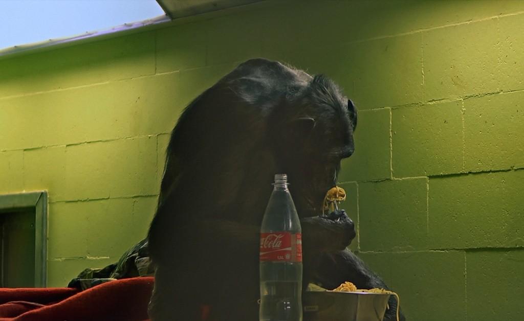 "Кадр из фильма ""Комплекс шимпанзе"""